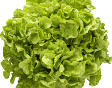 Lettuce and Other Leaves